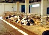 낙농장 장비 살아있는 가축 직류 전기를 통한 암소는 자유롭게 축산 장비를 실속시킨다
