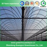 Agriculture Plastic Greenhouse for Vegetable and Fruit