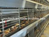 De Batterij van de Jonge kip van het Landbouwbedrijf van het gevogelte/Automatische Kooi voor Landbouwer voor het Systeem van de Kooien van de Jonge kip van de Verkoop (het Frame van H)