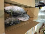Gefrorener gelber Heck-Fisch-Lieferant