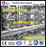 自動鶏の卵のコレクション機械