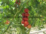 Рр Fibrillated УФ высокой прочности томатный веревки