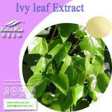 100% натуральные айви экстракт листьев, Hederagenin Hedera Helix извлечения (3%, 5%, 8%, 10% или 10: 1)