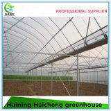 Serre chaude en plastique commerciale agricole de Chine