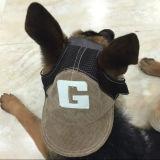 Nuevo sombrero de béisbol diseñado para los perros