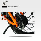 Bicicleta gorda elétrica ambiental verde /36V 250W que dobra Ebike