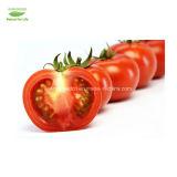 トマトのリコピンCAS502-65-8からの高品質のエキス
