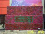 جدار شاقوليّ خضراء ([أن-و3320])