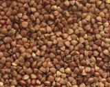 Núcleos, compaginador del color del CCD del grano de la quinoa
