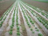 PE Agricultura Control de malezas pajote Film