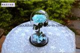 La cubierta de cristal preservó amor eterno de la flor fresca