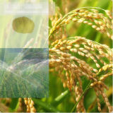 Fertilizante 52% Aminoácido em pó Fertilizante orgânico