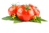 Licopeno 5% -98%, Extracto de tomate Fructus Lycopersici Esculenti.