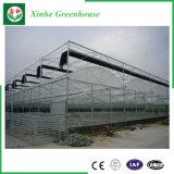 Estufa de vidro de Venlo da extensão de Muti do projeto moderno para a agricultura