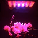Il LED più poco costoso coltiva l'illuminazione chiara della pianta