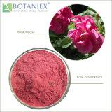 Лидер продаж среди китайских трав природные качества закрывается извлечения, лепестковый извлечения, Роза Flower Extract (Rosa rugosa) 10: 1