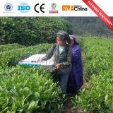 Machine de peluches à feuilles de thé à nouveau type