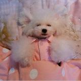 100% coton pyjamas petit chien Shirt Costumes Vêtements doux manteau pet