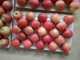 Signora dentellare Plastica-Insaccata fresca Apple