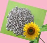 Les noyaux de graines de tournesol à huile