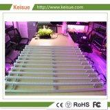 Sistema di illuminazione professionale del LED per l'azienda agricola verticale urbana