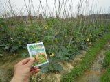 Fertilizzante organico del terreno di Unigrow sulla piantatura di verdure
