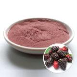 Extrait normal de fruit de mûre d'approvisionnement direct d'usine
