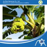 Мешок Jc-021 банана