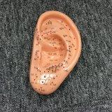Modello di agopuntura dell'orecchio per lo studio del punto di agopuntura