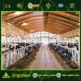 Сборные стальные конструкции здания фермы крупного рогатого скота крупного рогатого скота конструкции сарай