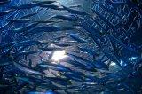 Gesundheits-Produkt-heißer Verkauf raffiniertes Fisch-Öl