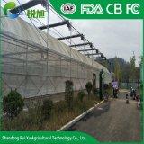 Faible coût de la Chine en plastique Single-Span agricole/serre commerciale pour la vente
