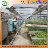 Invernadero de vidrio Polytunnel agrícola con comercial agrícola