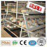 Jaula automática del pollo tomatero de la granja de las aves de corral