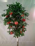 Migliore albero di vendita di Fuit di di melo Gu51694960