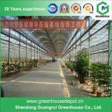 Дом полиэтиленовой пленки парника самомоднейшей конструкции однослойная зеленая