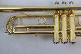 대중적인 트럼펫 학생 트럼펫 (TR-100)