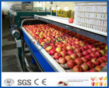 aufbereitende Zeile aufbereitende Maschine des Apfels des Apfelsaftes