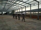 Chambre de poulet Semi-Closed de structure métallique pour la couche