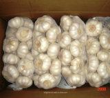alho fresco branco da fábrica de 5.5cm