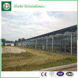Парник стеклянного парника Venlo аграрный для сбывания