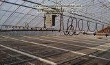 Estufa solar feita por Jin Xin Companhia