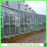 Grande Span Venlo Glass Greenhouse per Agriculture