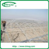 Fixed commerciale Vent Greenhouse per Rosa