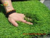 Teste artificial padrão global da grama do relvado por Labosport