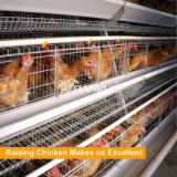 Un type cages automatiques de poulet de batterie utilisées pour le poulet d'oeufs