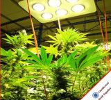 LA PANNOCCHIA LED del fornitore 756W della Cina coltiva gli indicatori luminosi per le piante mediche