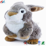 Robin il grande coniglio della guancica