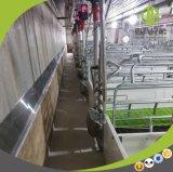 Equipo de cultivo de parto galvanizado venta al por mayor del cerdo del embalaje para la venta