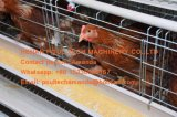 Hete Verkopende Hete Gegalvaniseerde Kooi een Frame die de Kooi van de Kip van de Kip van het Ei voor het Landbouwbedrijf van het Vee leggen
